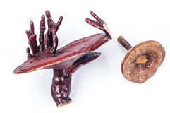 Ganoderma Stock Images