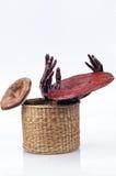 Ganoderma royalty free stock photography