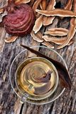 Ganoderma lucidum Fotografia Stock Libera da Diritti