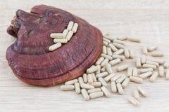 Ganoderma lucidum kapsuła - Ling zhi pieczarka Obrazy Stock
