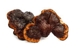 Ganoderma Lucidum - Ling Zhi Mushroom stock foto