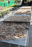 Ganoderma lucidum produkt zdjęcie stock