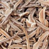 Ganoderma lucidum slice Stock Photos