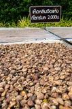 Ganoderma lucidum suszący. Zdjęcia Stock