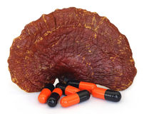 Ganoderma mushroom with capsule Stock Photo