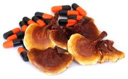 Ganoderma mushroom with capsule Royalty Free Stock Photo