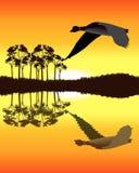 Gans, die niedrig über Wasser fliegt Lizenzfreies Stockfoto