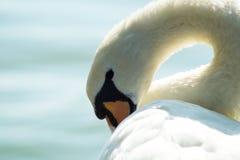 Gans, Ente, anatide der See Lizenzfreie Stockfotografie