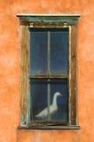 Gans im Fenster Stockbild