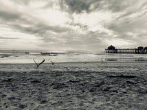 Ganska ögonblick på stranden i denna monokromma bild Royaltyfri Foto