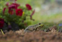 Ganska en väntan i trädgården fotografering för bildbyråer