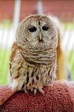 ganska owl royaltyfria bilder