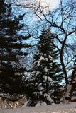 ganska vinter royaltyfria foton