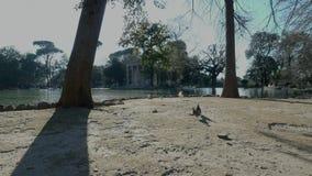 Ganso y palomas del cisne cerca del lago y del Tempio di Esculapio Borghese del chalet
