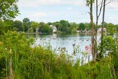 Gansos de Canadá no lago Wilcox Fotografia de Stock