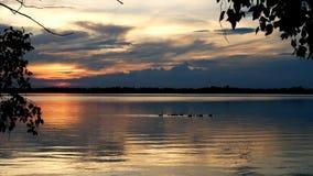 Gansos de Canadá que nadam no lago Irving em Bemidji Minnesota vídeos de arquivo