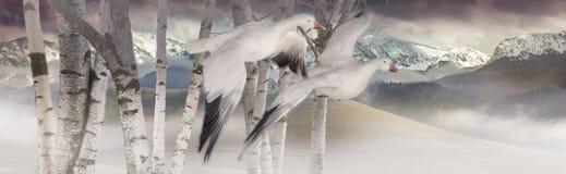 Gansos de nieve Foto de archivo libre de regalías
