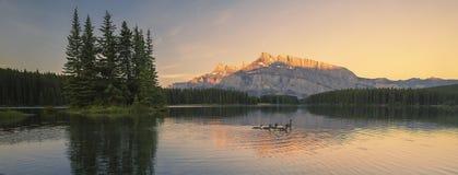 Gansos do parque nacional de Banff Imagens de Stock Royalty Free