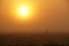 Gansos en la niebla Foto de archivo
