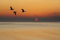 Gansos en la salida del sol Imagen de archivo libre de regalías