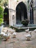 Gansos na jarda interna da igreja Fotos de Stock Royalty Free