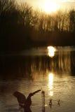 Gansos que aterrizan puesta del sol Fotos de archivo