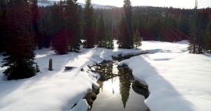 Gansos que sentam a costa de um córrego pequeno no inverno com neve filme