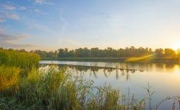 Gansos que voam sobre a costa de uma lagoa no nascer do sol no verão fotos de stock royalty free
