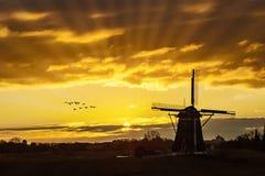 Gansos que vuelan contra la puesta del sol en el molino de viento holandés imagen de archivo