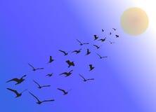 Gansos que vuelan en la formación en verano Fotografía de archivo libre de regalías