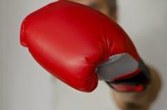 Gant de boxe Image libre de droits