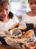 Gant de port d'enfant se tenant et jouant avec le petit porc-épic de hérisson photos stock