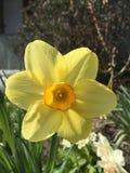Ganz über Blumen und Natur Lizenzfreie Stockfotografie