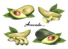 Ganze Avocado, geschnitten mit Blättern lizenzfreie abbildung