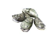 Ganze frische rohe Auster Stockbilder