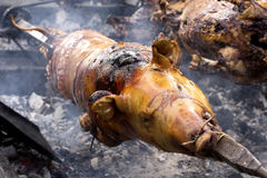 Ganze Karkasse einer Schweinröstung stockfotos