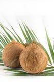 Ganze Kokosnüsse mit Blättern auf Weiß Stockfotos