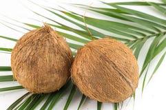 Ganze Kokosnüsse mit Blättern auf Weiß Stockfoto