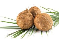 Ganze Kokosnüsse mit Blättern auf Weiß Stockbild