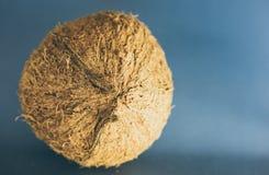 ganze Kokosnuss legen auf einen dunkelblauen Hintergrund stockfotografie