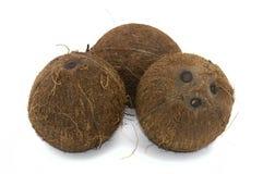 Ganze Kokosnuss lokalisiert auf weißem Hintergrund stockfoto