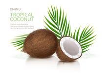 Ganze und halbe defekte Coconuß lizenzfreie abbildung