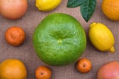 Ganze Zitrusfruchtzusammenstellung auf natürlichem Rausschmissmaterial Lizenzfreie Stockbilder