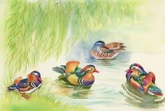 Ganzentroep die op de vectorillustratie van de vijverwaterverf zwemmen Stock Fotografie