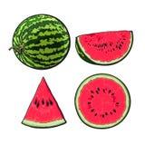 Ganzes, halbes, Viertel und Scheibe der reifen Wassermelone, Skizzenillustration Lizenzfreies Stockfoto