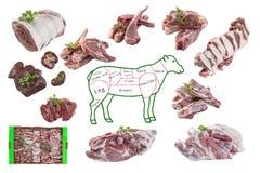 Ganzes Zeichnungshammelfleisch im Stück und in den rohen Stücken Lammfleisch auf weißem Hintergrund Lizenzfreies Stockbild