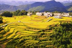 Gaopo terrace at guizhou china. The Beautiful layer of mountain and nature in rice field on terrace of Guizhou china Stock Photo