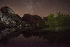 Gapić się up przy gwiazdami - Joshua drzewo fotografia stock