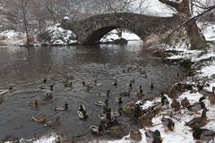 Gapstow bridge - Central Park Royalty Free Stock Photo