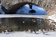 Gapstow Bridge in Winter within Central Park. Ice and snow on a Winter Day in Central Park Royalty Free Stock Images